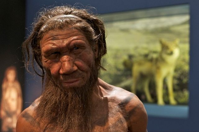 Neanderthal facts