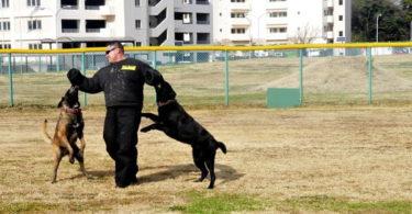 Spirit Dog Training