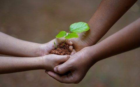 Soil Disintegration